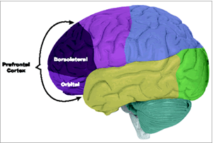 Korteks Prefrontal